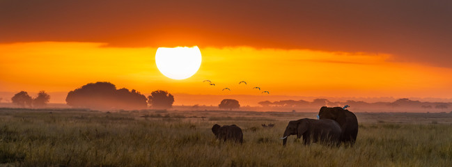 Elephants at sunrise in Amboseli, Horizonal Banner