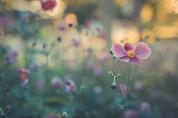 Delicate flowers on blurred background, magical nature scenery, soft sunlight and artistic nature...