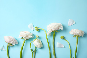 Flat lay composition with ranunculus flowers on color background, space for text