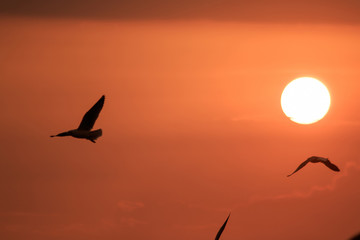 Silhouette of seagulls and sunset