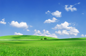 Idyllic view, green field and the blue sky with white clouds