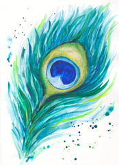 Background Peacock feather watercolor picture on a white