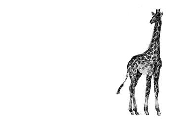 giraffe graphics. Africa. picture