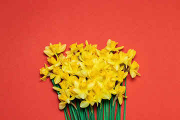 Printed kitchen splashbacks Narcissus Beautiful bouquet of yellow daffodils on red background
