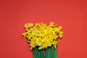Door stickers Narcissus Beautiful bouquet of yellow daffodils on red background