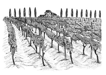 Vineyard landscape with building on the hill and trees beside. Hand drawn sketch vector illustration isolated on white Fototapete