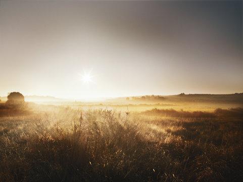 Sun shines on cornfield in Spain