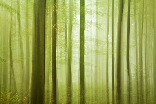 Deciduous forest in autumn, tree trunks, soft light, abstract