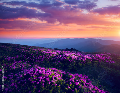 Wall mural Awesome alpine valley in warm light. Location Carpathian national park, Ukraine, Europe.