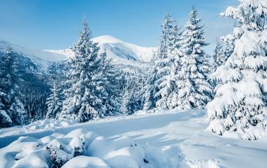 壁紙(ウォールミューラル) - Scenic image of fairy-tale woodland. Location Carpathian national park, Ukraine, Europe.
