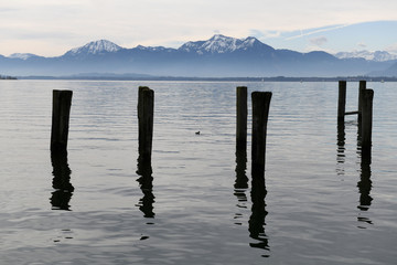 A duck swims in front of the Alps on lake Chiemsee in Prien am Chiemsee