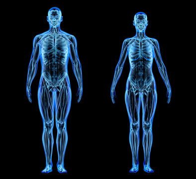 Man and woman muscle and skeletal systems. X-ray.