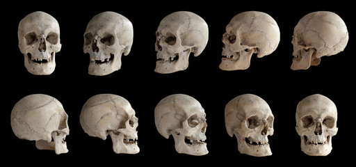 Human anatomy. Human skull. Collection of rotations of the skull. Skull at different angles. I