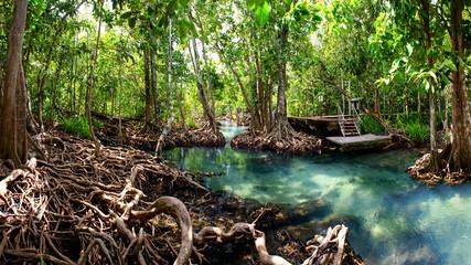 mangrove forest krabi thailand