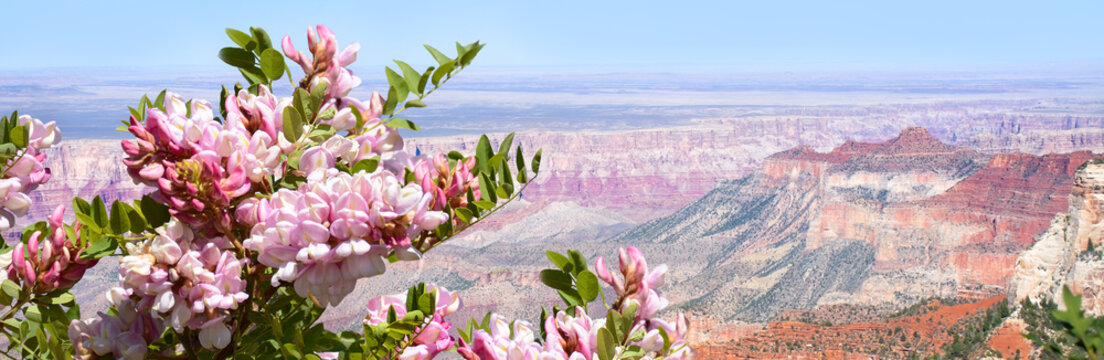 Beautiful summer mountain landscape in Arizona. Flowers blooming on  North Rim, Grand Canyon National Park, Arizona,  USA. Image  for banner or web header.