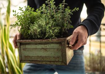 Urban Gardening | Herbs