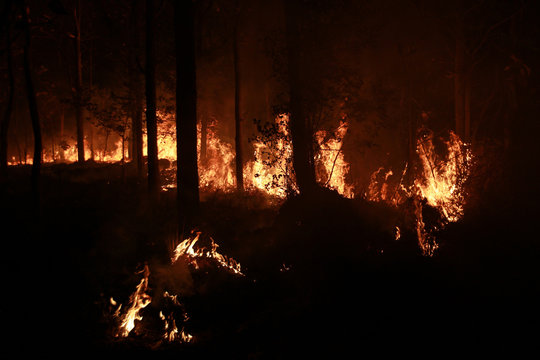 Teak trees burned during the dry season , Pollution PM2.5 from Wildfire