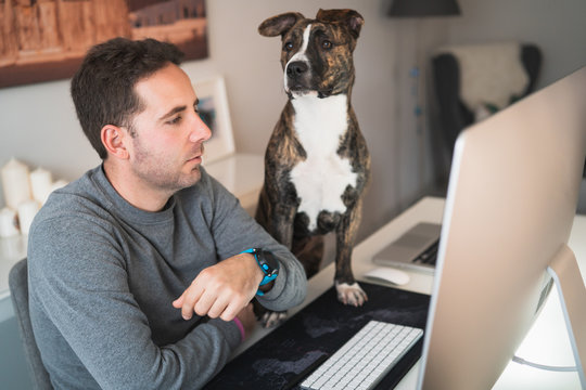 Freelancer man working from home with his dog sitting together in the office