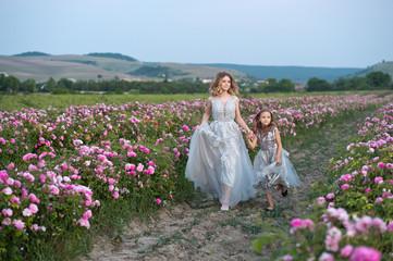 Beautiful sisters in grey dresses collect roses in Bulgaria in sunrise.