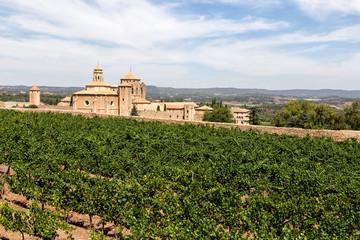 Vineyards in Santa Maria de Poblet monastery, Catalonia, Spain