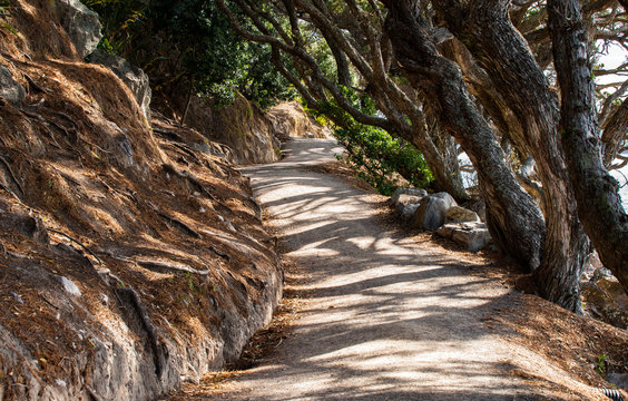 Leaning pohutukawa trees and shadow patterns on Mount Maunganui Ba1se track