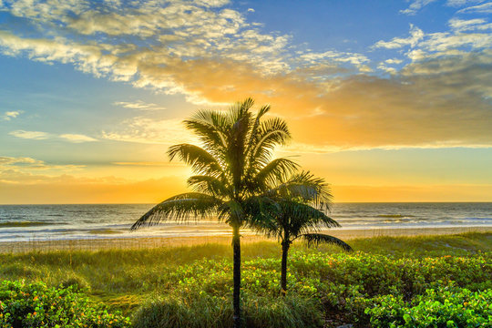 Lone Palm Tree at Sunrise on Cocoa Beach, Florida