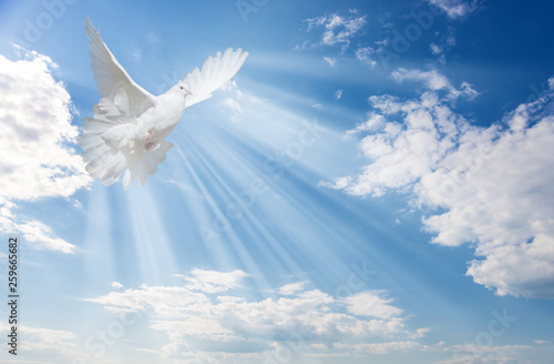 Wall mural White dove against blue sky with white clouds