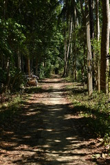 Foto op Canvas Natuur Orchard walkway Natural view of the area outside the city