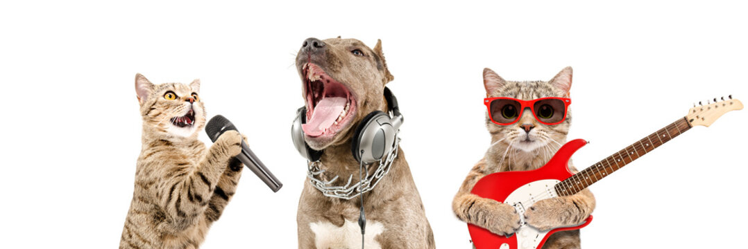 Portrait of pets musicians together isolated on white background