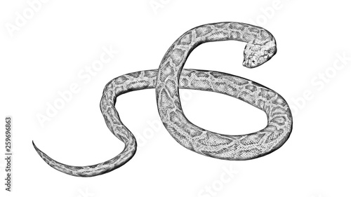 pencil drawings of snakes