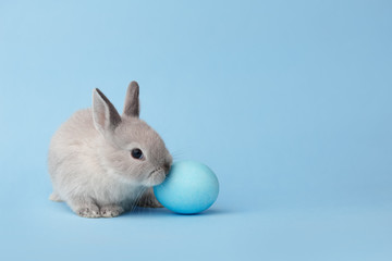 Easter bunny with egg on blue background