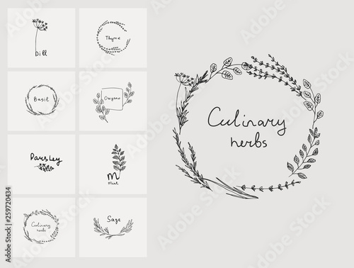 Hand drawn set of culinary herb  Basil and mint, rosemary and sage