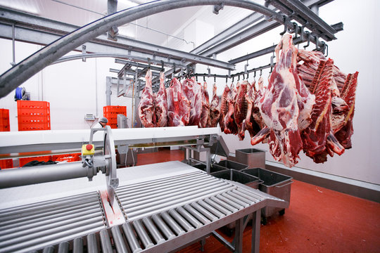 A lot of chopped raw meat hanging and arrange in a row ready for processing process in a meat factory. Horizontal view.