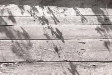 Wall Mural - foliage shadow on a gray wooden wall. Beautyful shadow background