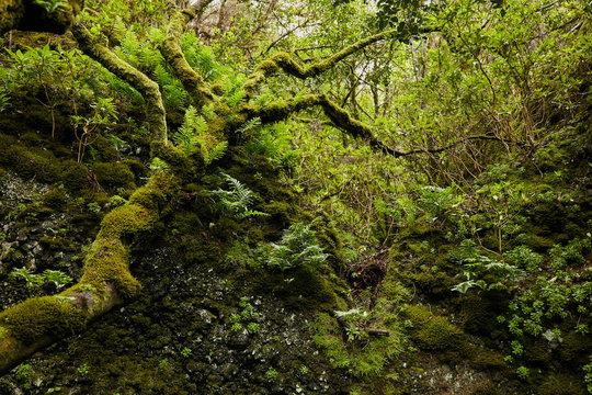 Lush green vegetation of tropical woods