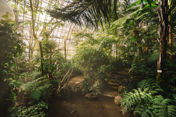 Dreamy landscape with exotic evergreen plants in greenhouse. Beautiful sunlight breaks through the window. Old tropical botanic garden. A variety of plants: palms, ferns, and conifers. Nature concept.
