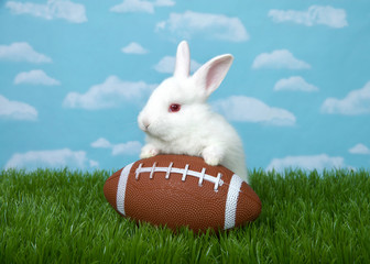 White albino baby bunny rabbit with a American football in green grass with blue sky background clouds.