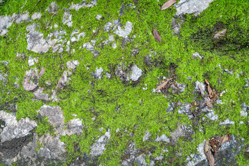Moss covered rocks creating abstract nature texture