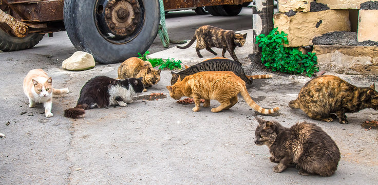 Homeless cats on the street