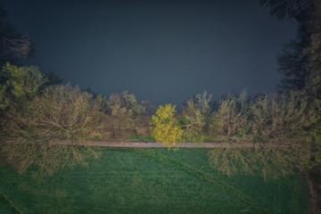 Bäume an einem See aus der Draufsicht senkrecht von oben