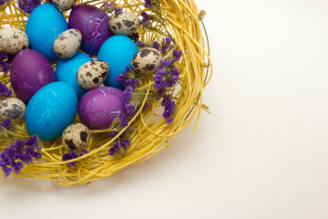 Colored chicken and quail egg in nest with flowers on white background. Easter concept.