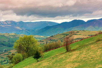 rural countryside in mountains. village in the distant mountain. agricultural fields on hills. trees on grassy slope. wonderful springtime landscape on cloudy forenoon weather