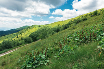 beautiful mountain landscape at summer forenoon. hills with grassy meadows among the forest. dirt road uphill the slope. clouds on the blue sky