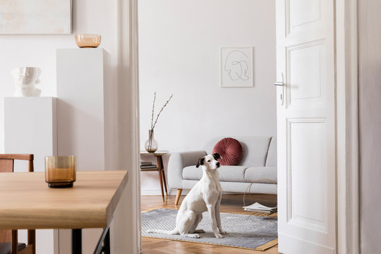 Stylish scandi interior of home space with design wooden table, chairs, sofa and accessories. Living room with design furnitures. Beautiful white dog sitting on the couch. Elegant home decor.
