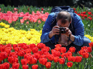 A man photographs tulips during a flower show at the Nikitsky Botanical Garden outside Yalta