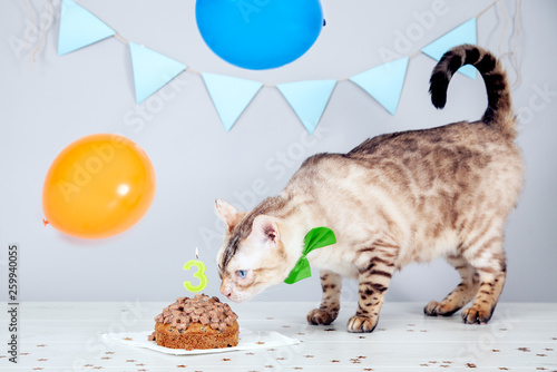 Cat Birthday Stock Photo And Royalty Free Images On Fotolia