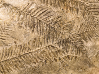 Petrified prehistorical fronds of fern imprint on the stone Wall mural