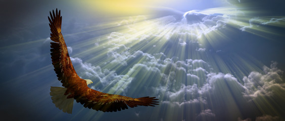 Wall Mural - Eagle in flight