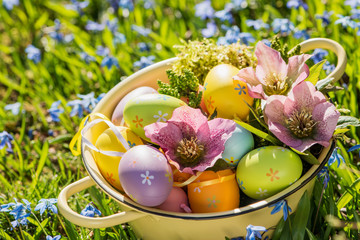 Colorful easter eggs with helleborus blossoms in a bowl