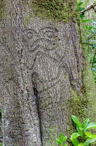 Rakau momori an early moriori tree carving or dendroglyph on a